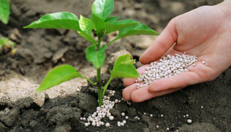 US imposes duties on OCP Phosphate exports