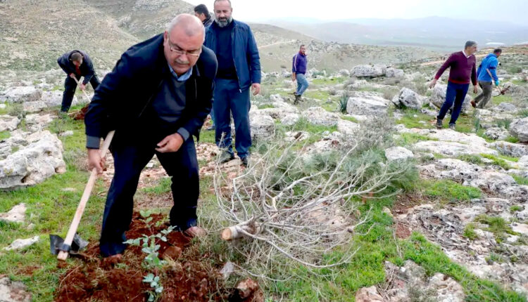 Palestinians united to replant hundreds of trees in northern West Bank valley right after an Israeli operation had uprooted them