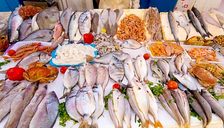 Morocco and The Basque Country Explore Investment Opportunities in the Fishing Sector